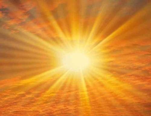 Формирование солнечных органов