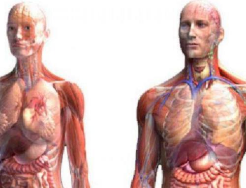 Связь металлов с внутренними органами